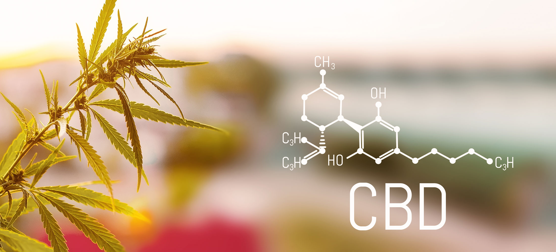 TSA Updates Policies on Travelling with CBD and Hemp Products